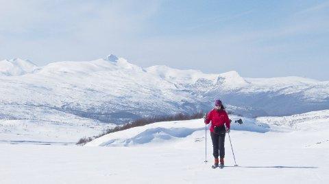 Vinterfavoritt: Beiarfjellet er populært til alle årstider, og snøforholdene er gode år etter år om vinteren.Foto: Thore Steen
