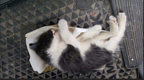KASTET UT I FART: Det var denne lille kattungen som ble kastet ut av en bil mellom Montér og Cater på Liertoppen.