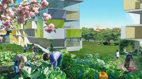 ØKOLANDBY: En ny bydel, bygd på miljø og bærekraft, hørtes interessant ut for mange da Snøhetta lanserte idéen i 2013