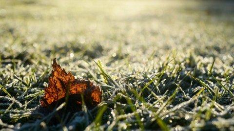 KALDERE TIDER: Ikke bli overrasket om du våkner opp til frost i begynnelsen av denne uka.