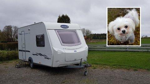 DAGENS HELT: Hunden Tingeling er dagens store helt i Mysen, etter at hun jagde bort frekke innbruddstyver.