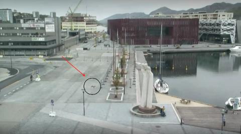 Rådyr observert midt i Sandnes sentrum.