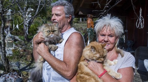 KATTEEIERE: Terje Henriksen og Berit Bindi er lidenskapelig glade i katter. Nå har de to katter hjemme i sin villa i Vammaveien i Eidsberg, Bellboy og Foxy.