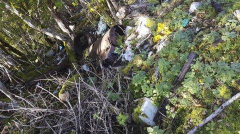 Økokommunen Tingvoll er ikke så rask i avtrekket. Nå purrer Miljødirektoratet på kommunen fordi det ikke er gjort noe for å rydde opp i en gammel søppelfylling ved vernegrensa til Boksaspa naturreservat.
