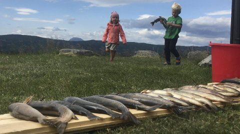 Fullmjøen: Tiril (3) og Sverre (5,5) kunne være stolte av den store fiskefangsten i Fullmjøen. 26 ørret totalt fra 250 til 600 gram. FOTO: Gunhild Aaslie Soldal