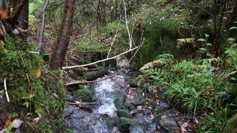 Kloakken dukka opp i elva ved regnver. Tirsdag formiddag var det ingen kloakk, trass kraftig regn.