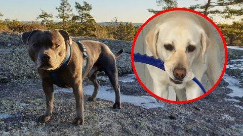 Eieren av hunden som angrep førerhunden Wita beklager nå hendelsen.