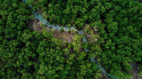Amazonasregnskogen produserer 20% av oksygenet i atmosfæren