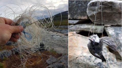DØD: – Jeg satte meg ved en bålplass i Knottheim da jeg plutselig ble oppmerksom på en liten død fugleunge, som var totalt surret inn i flere meter med nylon, sier Olaf Andreassen.