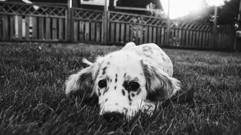 Hunder skal, ifølge undersøkelse, gi deg et bedre liv