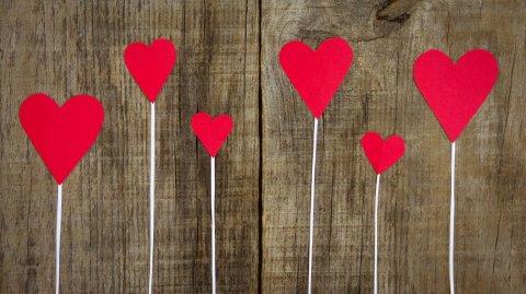 Fargebetydning: Røde blomster betyr kjærlighet. Burgunderrøde betyr skjønnhet og ynde. Lyserosa betyr beundring eller sympati. Mørkerosa betyr takknemlighet. Orange betyr entusiasme og lidenskap. Gule betyr lykke og glede og hvit betyr respekt og ydmykhet, opplyser Mester Grønn.