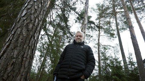 Trist: Steinar Andresen blir både trist og lei seg når han ser skogen sin råtner på rot. begge foto:ole Kr. Trana