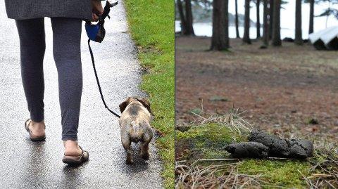 FELLES REGLER FOR HUND: Nå skal reglene bli like for hele storkommunen, når det gjelder båndtvang og hundehold. I forslaget til nye forskrifter, heter ett av punktene at «hundeholder plikter å fjerne avføring fra hund langs offentlige veier i tettbygd strøk». (Arkivfoto: Olaf Akselsen/Asle Rowe)