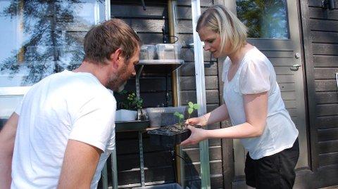 Familien har også et lite drivhus, der de dyrker urter og bær til eget bruk.
