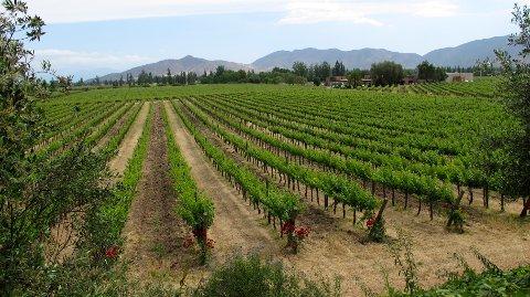 NORSK i CHILE: Bergenser og skipsreder Dan Odfjell driver en vingård i vakre Maipo-dalen i Chile, der han blant annet produserer Armador-vinene.
