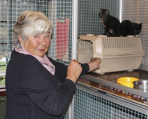Reddet: Wenche Ødegaard tok hånd om kattene, men kunne ikke beholde dem.