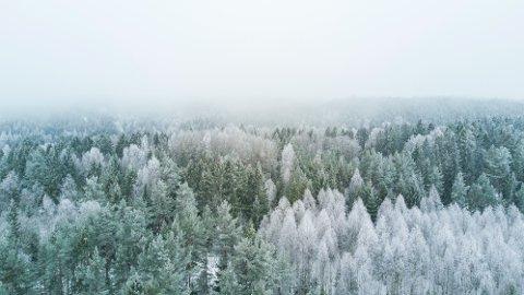 """Nesoddtangen. Kommunen vår er 5. best i landet på å ta vare på naturen, ifølge Sabimas """"Naturkampen"""". Neste år bør vi bli enda bedre."""