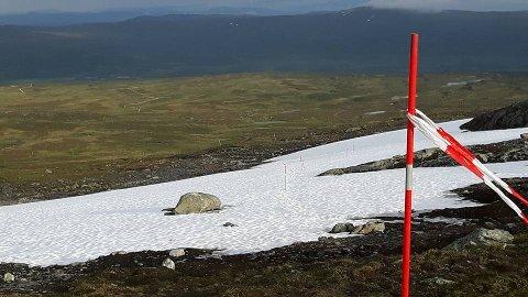 SNØ I FJELLET: På tur ned fra Kjøliskarven ligger den lengste fonna som må passeres.