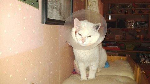 Lucky Strike er en av de heldige kattene, som har fått hjelp. Foto: Dyrebeskyttelsen Norge Hedmark.