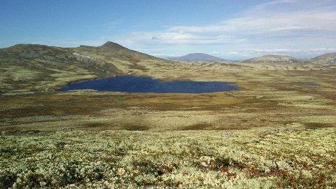Tolga Østfjell, også kalt Raudsjøheimen, er  et villreinområde som er innlemmet i rammeplanen for vindkraftutbygging.