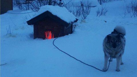 Tro det eller ei: Dette knøttlille hundehuset til Jarfe skal takseres som et uthus.