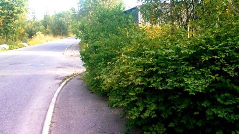 Hekken din bør ikke se sånn ut når unger skal forbi den på vei til skolen.