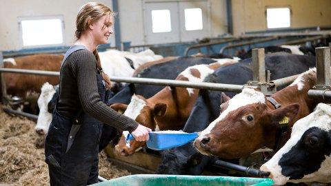 Partene i jordbruksavtalen hadde den 23. september et møte i arbeidet med nedskalering av melkeproduksjonen etter bortfall av eksportsubsidiene fra 1. juli 2020. Foto: Colourbox