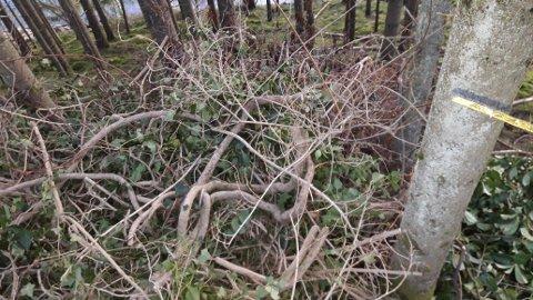 DUMPET: På Glendrange oppleves det at hageavfall dumpes støtt og stadig.