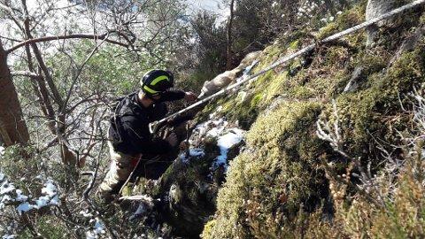 REDNINGSAKSJON: Brannmann Sondre Myhr henta kvalpen ned frå berghylla.