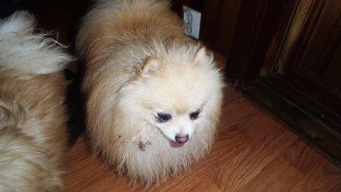 Hundene sliter med diaré, og får minimalt med mosjon, heter det i rapporten fra Mattilsynet.