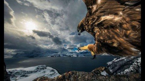 Bildet tatt på Kvaløya ble best i kategorien «Fugler» i verdens største konkurranse for naturfotografer - «Wildlife Photographer of the Year».  FOTO: AUDUN RIKARDSEN
