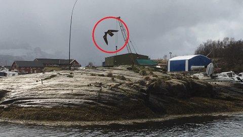 Skremsel: Denne dragen av en fugleskremmeren er satt opp på skjæret like ved båtplassene. Fylkesmannen hadde først godkjent den, men nå snur de.