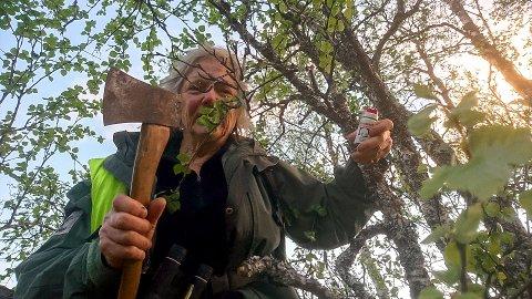 FLYKTET FRA BJØRNEN: Sidsel Haldorsen (72) hadde forskanset seg med pepperspray og øks i tilfelle hun skulle møte på bjørn da hun gjetet sauene sine. – Hva skulle jeg gjøre? Jeg klatret opp i et tre. Jeg prøvde flere trær, men klarte ikke komme meg opp, forteller Sidsel.