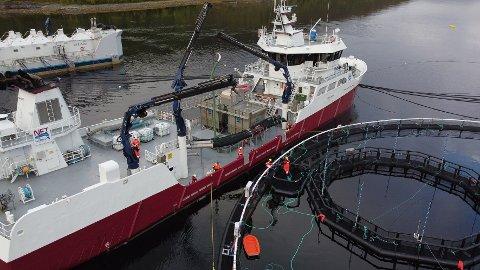 Utsett: En brønnbåt leverer smolt til den første iFarm-merden til Cermaq. Utviklingsprosjektet skal gå over fem år