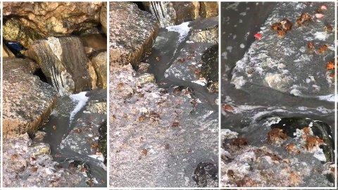 Kloakk i fjæra: En driftsstans sørget for at kloakken gikk i fjæra på Nordsia i Bodø. Helt etter kravene hvis feilen først har skjedd, sier prosjektleder.