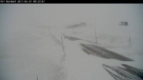 Slik ser det ut ved Dyranut på Hardangervidden klokken 0825.