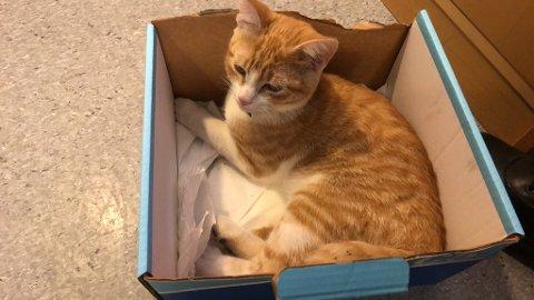 TRENGER PÅPASSER: Politiet vil nødig ta den skadede katten av dage. Derfor håper de eieren eller noen som kan passe på den melder seg raskt.