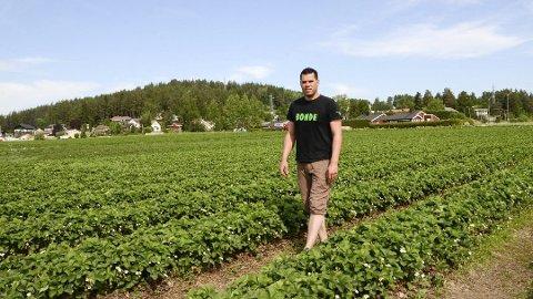 JORDBÆRBONDE: Steffen Green på Breivik gård i Åmot, Modum