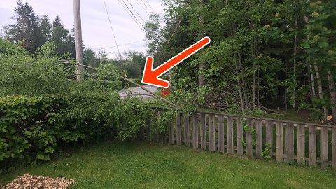 URYDDIG: Dette bildet viser treet som har falt inn i hagen til Andreas Kvisle.