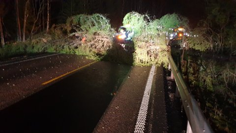 Vitnet forteller at politiet og Vaktmesterkompaniet var på stedet 20 minutter etter at det store treet datt over hele veibanen og fikk ryddet.