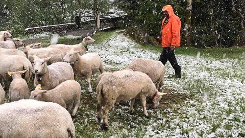 NORDDALSFJORDEN: Det snør jamnt og trutt i Norddalsfjorden