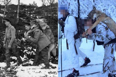Då søskenbarna Dagfinn og Henrik Berg viste fram ulven i 1950, vart dei mottekne som heltar. Jegerane som felte «Naustdalsulven» denne veka, har blitt sladda. Dette for å skjerme seg frå hets og truslar.