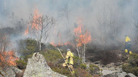 Skogbrann i Vågsøy, Tennebø.