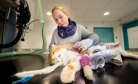 Dyrevernorganisasjonen NOAH anmelder skytingen av katten «Tigern».
