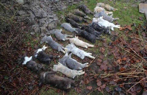 DØDE KANINER: Mattilsynet tok seg inn i en kvinnes leilighet og fant en rekke døde kaniner fordi de hadde fått tips fra en nabo. Hele 800 sa fra om det de mente var bekymringsverdige forhold i fjor. Foto: Mattilsynet