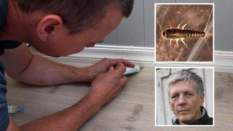 GIFT: Skjeggkre kan være ekkelt å ha i hus, selv om det ikke gjør noe skade. Skadesjef Stein Norstein (innrammet foto) i Anticimex forteller at innsprøyting av giftåte, slik hans kollega Jens Galby gjør på bildet, er en effektiv behandlingsmåte. Foto: Kjetil Næss (Vestby Avis) / NTB scanpix / Privat