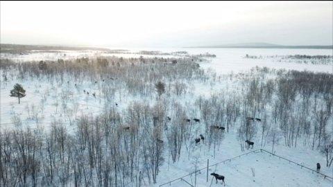 INVASJON: Et 30-talls elger har lagt sin elsk på en hestegård. Foto: Skjermdump SVT