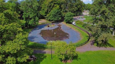 SVANEDAMMEN: Slik ser den ut, tømt for vann. Bunnslammet blir renset etter invasjon av alger.