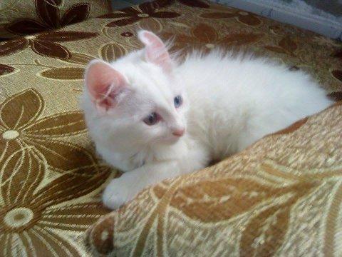 KRIGSFLYKTNING: Katten Mela er på flukt fra krigen i Syria og er snart på plass i Värmland. Foto: Privat