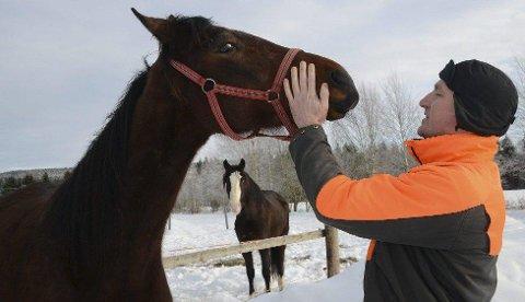 KAN HEST: Kjell Alrich Schumann er i gang med å bygge sitt hestesenter på Åsnes Finnskog. To avlsmerrer er på plass. Schumann kan mye om hest, og skal nå bruke sin kunnskap på å skape egne travere. Foto: Sverre Viggen